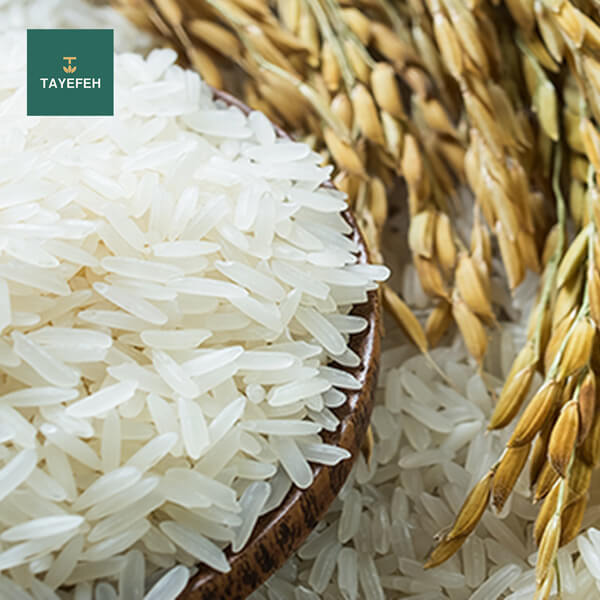 Properties and harms of rice