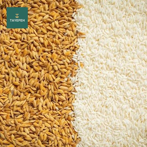 خرید برنج اینترنتی